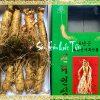 Sâm Tươi Hàn Quốc 10 Củ 1kg