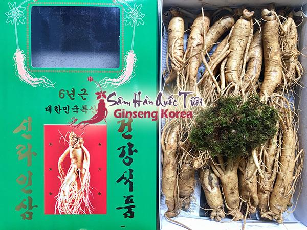 Sâm tươi Hàn Quốc loại hầm gà từ 20 - 30